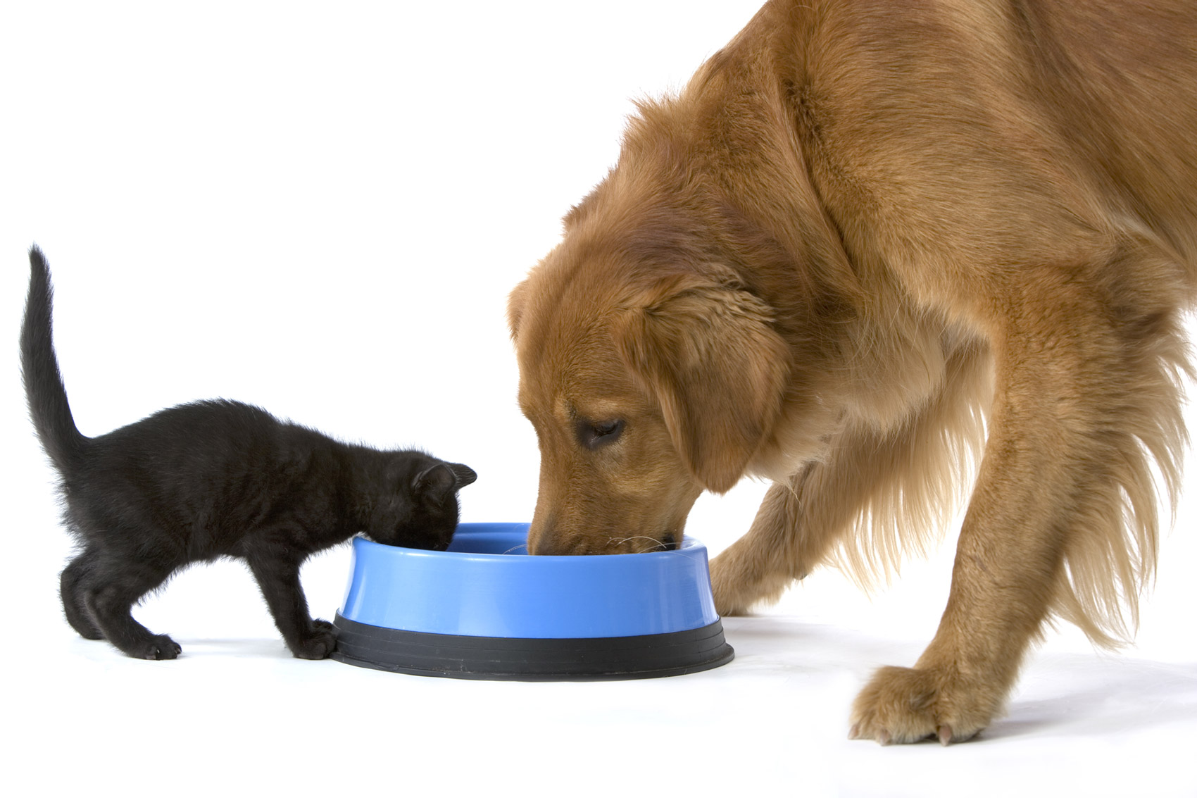dog-and-cat-eating