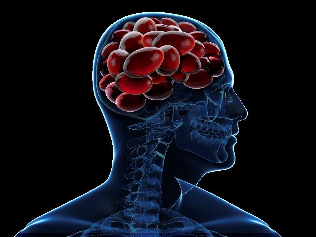 krill-oil-brain