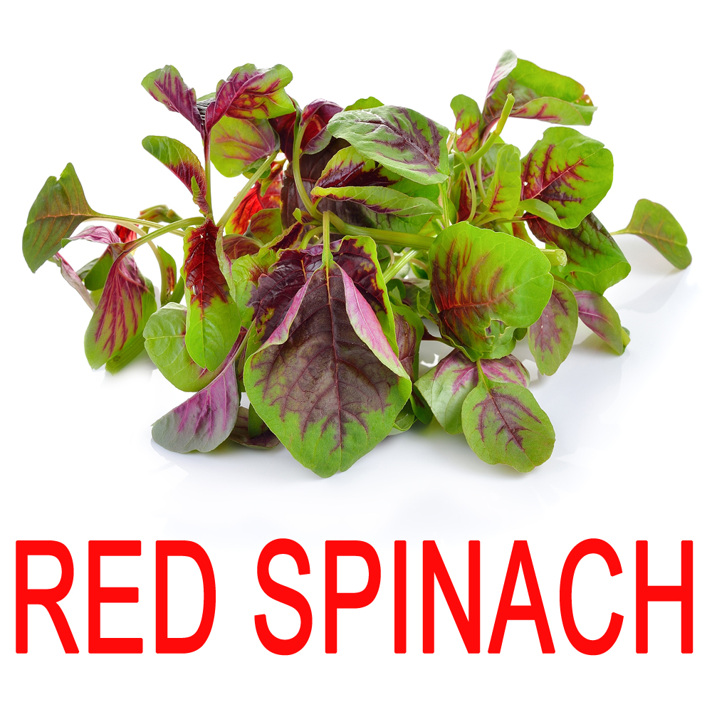 red-spinach-2